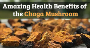 Benefits of Mushroom Chaga, himsedpills